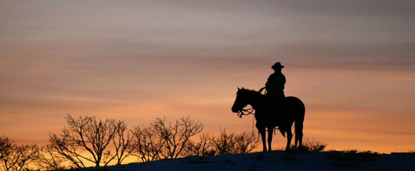 Riding into the New Year with Caution: Making the Case for Equine Liability Insurance