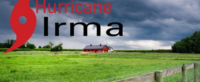 Hurricane Irma Preparedness: Tips for Animal Owners