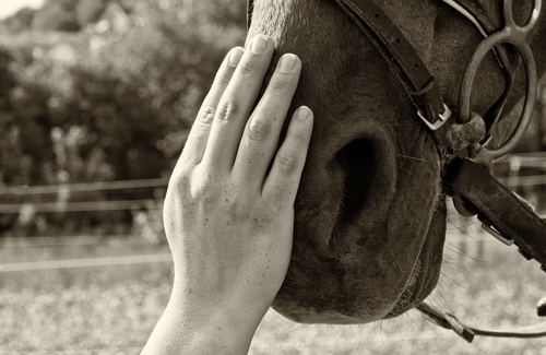 Nonprofit Equine Assisted Activities and Therapy (EAAT) Program