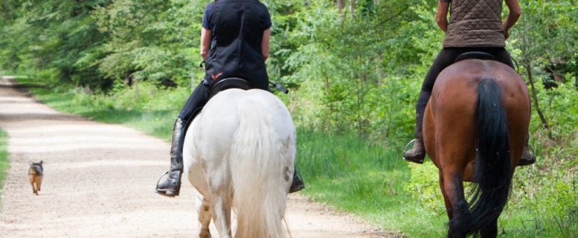 Improving Equestrian Access to Public Land