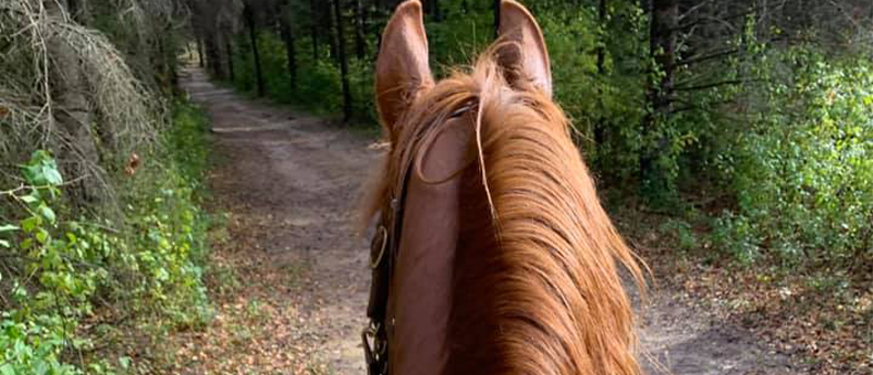Equine Trail Riding in NC National Forests Survey