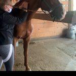 Rejuv-A-Horse