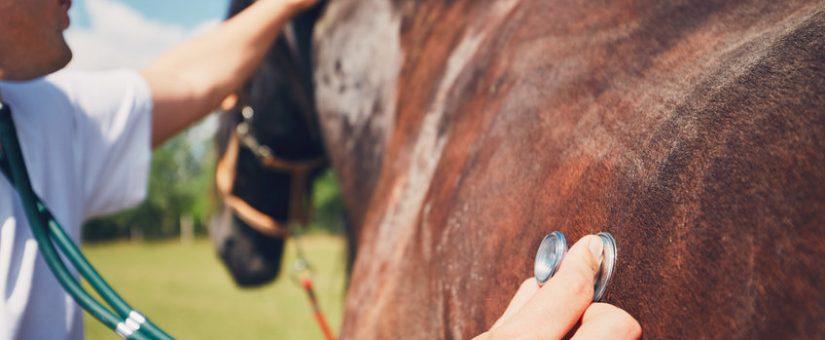 Bullous amyloidosis in a horse: first description in veterinary medicine