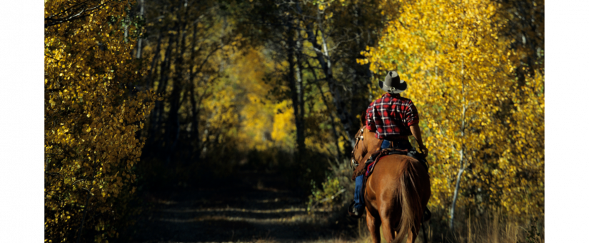 Sharing the Trail with Hunters: Riding Safety Tips for  Hunting Season